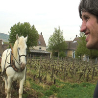Pablo Chevrot supervise le labour du vignoble à cheval